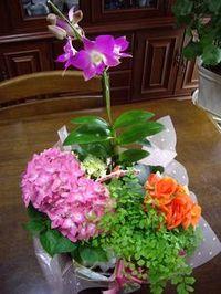 Flower_3