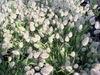 flowers008